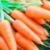 Tác dụng của củ cà rốt